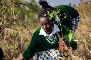 Environnmental sustainability